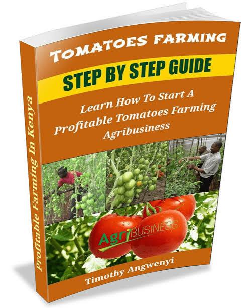 TOMATOES FARMING - TIMOTHY ANGWENYI